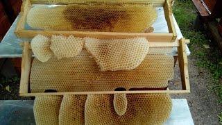 Пчеловодство Рои 2016г Beekeeping stray bee swarms 2016(, 2016-06-06T07:15:13.000Z)