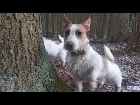 Охота собак на мышей