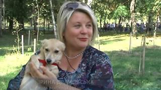 У Сумах пройшла перша виставка безпритульних собак