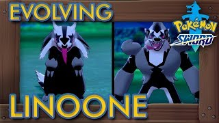 Baixar Pokémon Sword & Shield - How to Evolve Linoone into Obstagoon