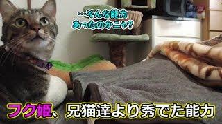 ポッチャリ系猫フク姫、実は兄猫達に勝る能力があった!