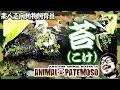 コケのをレイアウトするのだ!【アカハライモリ Japanese fire belly newt】【ビバリウムvivarium】