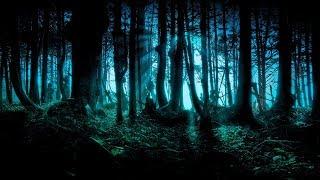 Custodes Noctis 🍄 Forest Psytrance Mix 🍄 Dark Forest Trip Set 🍄