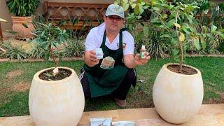 Segredo Para Combater Cochinilhas em Plantas