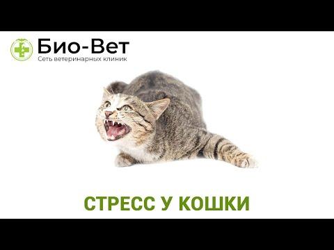 Стресс у Кошки �� Симптомы и Лечение // Сеть Ветклиник БИО-ВЕТ