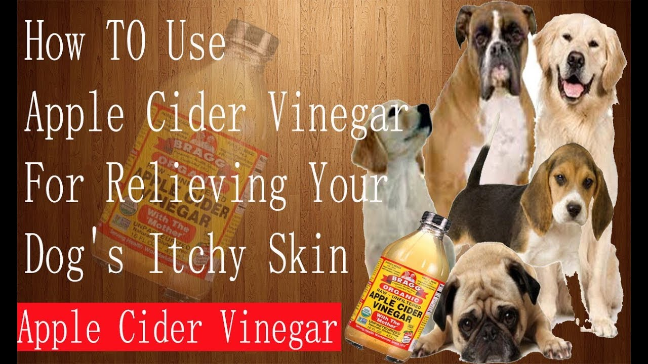 Vinegar For Dog S Itchy Skin
