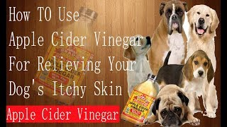 How To Use Apple Cider Vinegar For Relieving YOur Dog