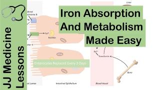 Iron Absorption, Transport, Metabolism and Regulation - Biochemistry Lesson