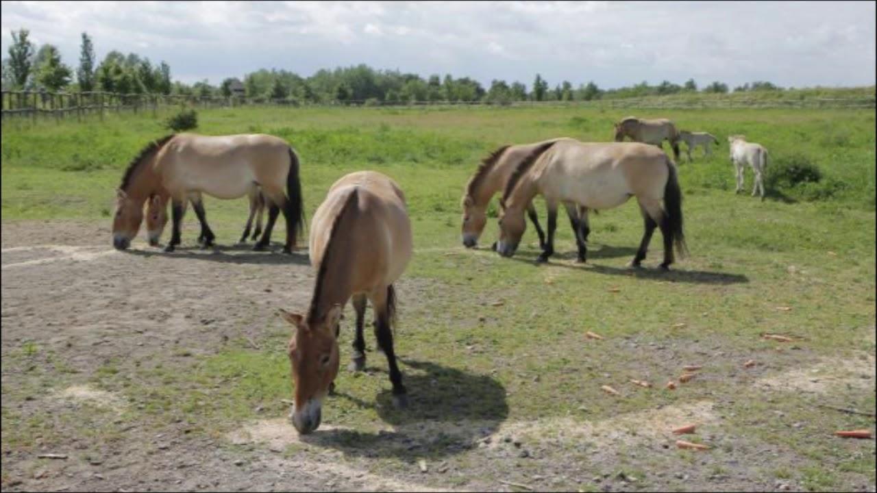 Anna Und Die Pferde