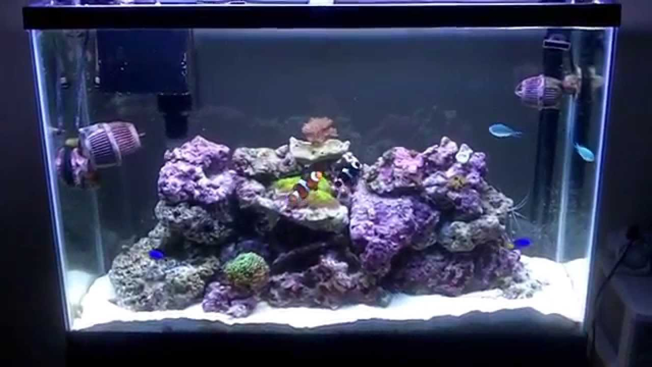 45 gallon saltwater reef fish tank hd youtube for Saltwater fish for 10 gallon tank