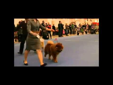 Helsinki Winner 2011 BOB & BOS
