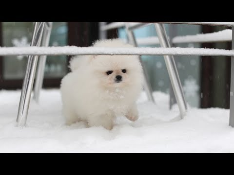 ♥Cute Dogs and Cats Compilation 2018♥ [HD]