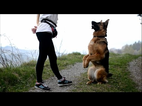 ..: Sara German Shepherd dog tricks - one year together :.