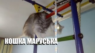 МОЯ КОШКА МАРУСЬКА - SEGINPLAY