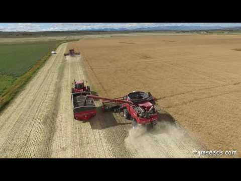2016 Canola-Seeding to Harvest in Southern Alberta