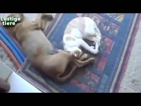 Nette Hunde und Katzen Schlafen in witzigem Position Zusammenstellung, Teil 1