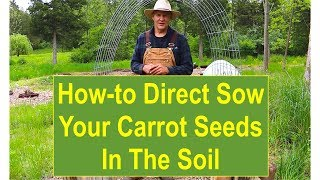 Basic Gardening Tips: Tips and Ideas on How-to Direct Sow Your Carrot Seeds