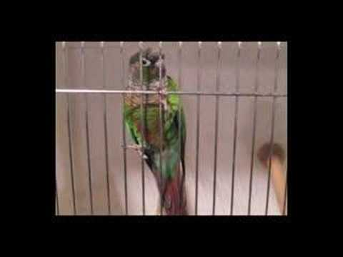 Show Birds and Fun Times at NCBS - BirdChannel.com