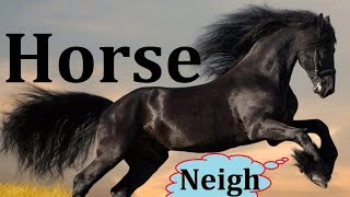 Horse Neighing Galloping Snort Sounds Sound Effect Songs Noises Loudly for Children Kids Hours Music