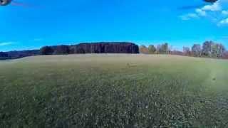 Australian Shepherd hunting Phantom 2 drone