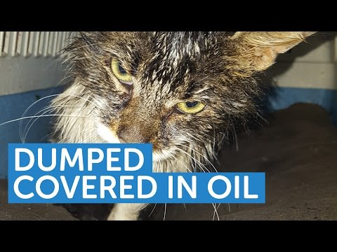 Dumped Covered in Oil | The Mayhew