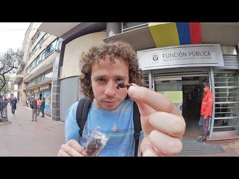 Comiendo HORMIGAS en Colombia!