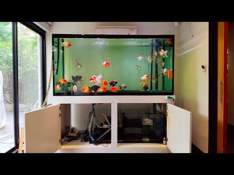 ปอง เย็นอากาศ  O4FS ตู้รวมปลาทอง & ปลาเทวดาอัลตัม + ปรับปรุงระบบกรอง Set 1
