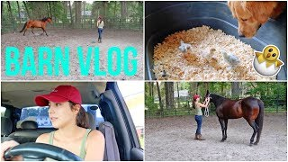 A Busy Day | BARN VLOG