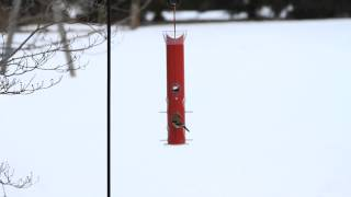 Perky-pet® Red Metal Tube Bird Feeder