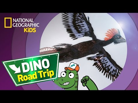 Anchiornis | DINO ROAD TRIP