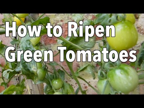 The Best Ways To Ripen Green Tomatoes