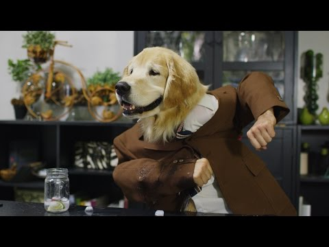 Talking Dogs Dinner Party in 4K! | DEVINSUPERTRAMP