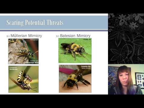 Insect Behavior and Communication