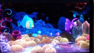 Finding Nemo, falling fish