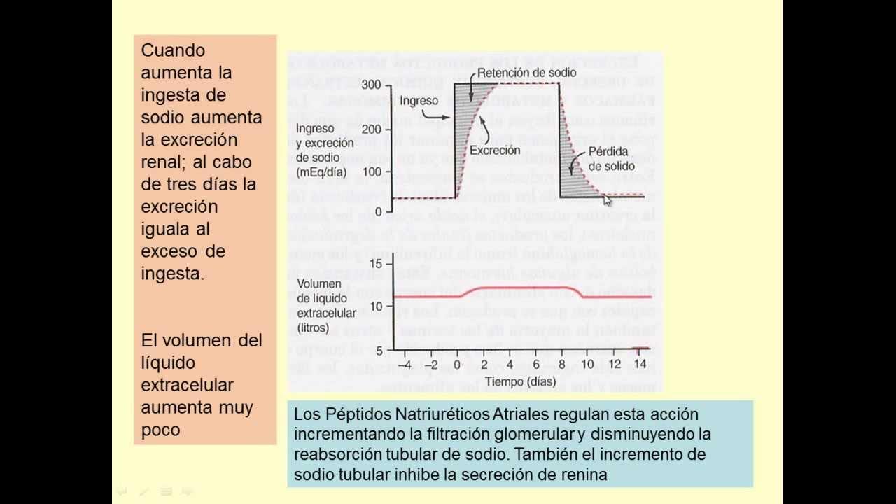 Fisiología renal 01 - Anatomía funcional del riñon. Parte 1 - YouTube