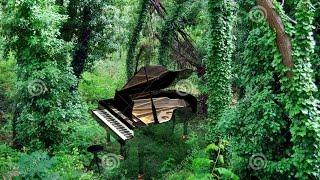 Hinos Tocados CCB Piano - Pássaros