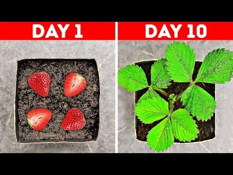 31 UNBELIEVABLE PLANT LIFE HACKS YOU SHOULD TRY