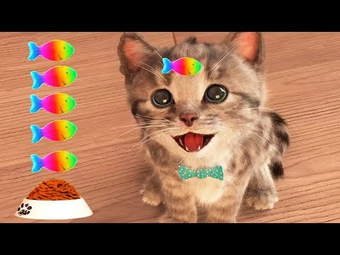 Play Fun Pet Care Kids Game - Little Kitten My Favorite Cat - Fun Cute Kitten Game For Children