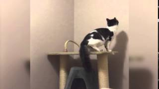 Cat Climbs into Ceiling
