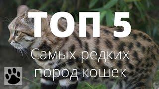 ТОП 5 самых редких пород кошек