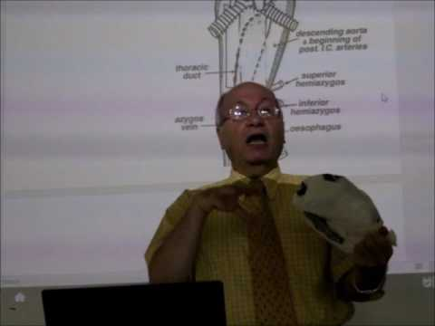 Anatomy of the pericardium pt1 by Dr.Wahdan