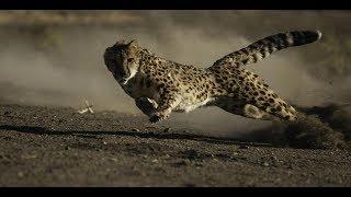 Самые быстрые существа на планете!