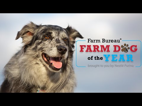 Farm Dog of the Year Contest