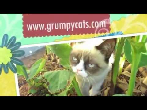 Grumpy Cat Meows