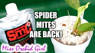 Spider mite infestation on my Orchids! - Testing SMC Mite Control