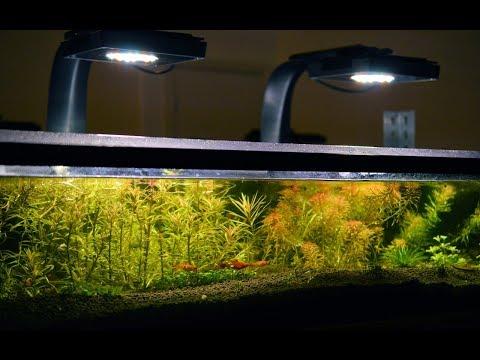 Swordtail Fry Graduates To The Fish Room 4K