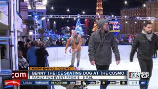 Benny the ice-skating dog at Cosmopolitan