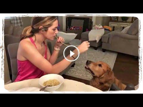 СМЕШНЫЕ СОБАКИ 2018, приколы с животными  FUNNY DOGS 2018, fun with animals #522
