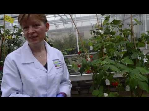 James Hutton Limited, The Raspberry Diaries, Ep 2