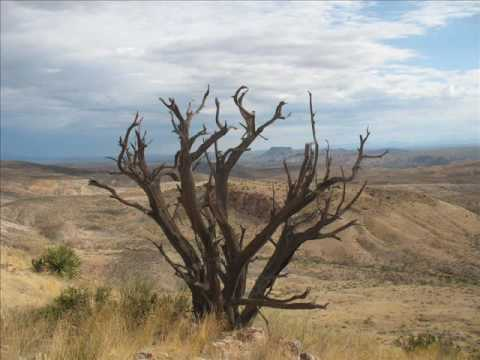 ocotillo hikers - trees of
